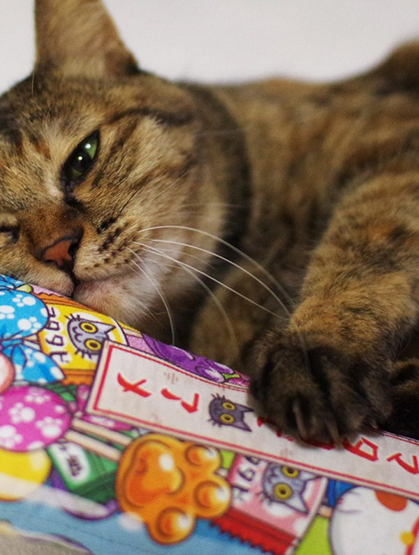 Best Japanese Cat Toys Your Cat Will Love on Amazon
