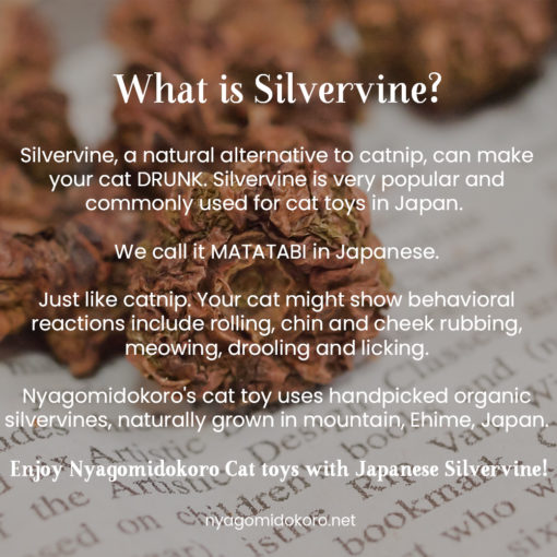 What is silvervine?