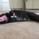 猫キッカー、海外の猫ちゃんにもスリスリしてもらってます!