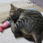 猫キッカーとよしおちゃんの動画♪