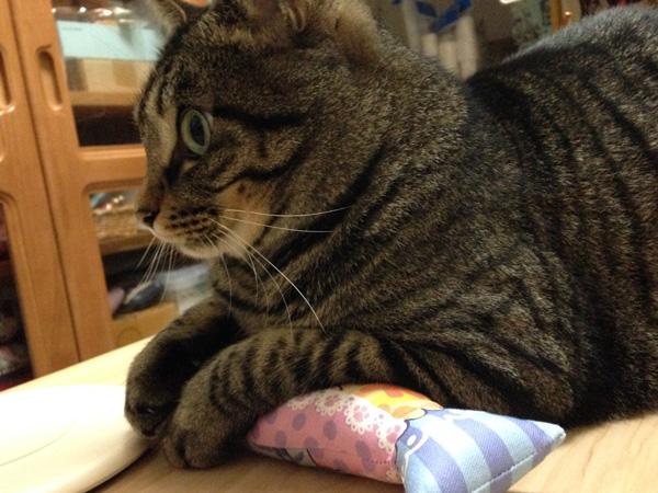 猫キッカー、価格改定についてのお知らせ