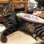 本日21時より、猫キッカーの販売を開始します!⇒ブログ更新しました