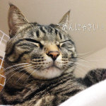 ブログを更新しました⇒猫キッカーの再販時期について