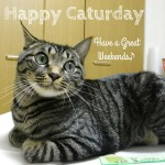 Happy caturday!Have a great weekend♪