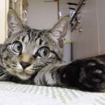 今日は『猫の日』だニャヾ(*ΦωΦ)ノ