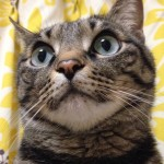 「まるごと猫フェスティバル」終了いたしました!⇒ブログ更新しました