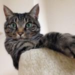 ケリケリケリケリ~で大興奮! ⇒猫キッカーのReview更新しました!