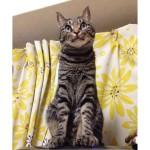 Have a wonderful Caturday and weekend! ~Myuプリンターの上で、ドヤ顔なみゅ〜くんです。電源を切ったり入れたり、、、(^^;; #cat#neko#catsofinstagram#キジトラ#サバトラ