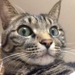 何日も雨続きでそろそろ太陽が恋しいニャ。暑くなるけどね〜It's been raining for days.️I miss the sun.🌞:#cat#neko#catsofinstagram#キジトラ#サバトラ