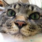 みゅ~くん、動物病院へ ⇒ブログ更新しました