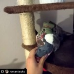 @romantisuko posted the video her cat playing with the Cat kicker that I made