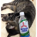 You might not know but the logo of Mitsuya soda is sometimes referred as a cat nose .See my previous photo if you want to know what Mitsuya Soda means .三ツ矢マークの説明の為に、滅多に飲まない炭酸を購入〜笑ひとつ前の写真を見てね.#cat#neko#catsofinstagram#キジトラ#サバトラ