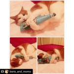 @boris_and_momo posted the photo of her cat playing with the Cat Kicker that I made!