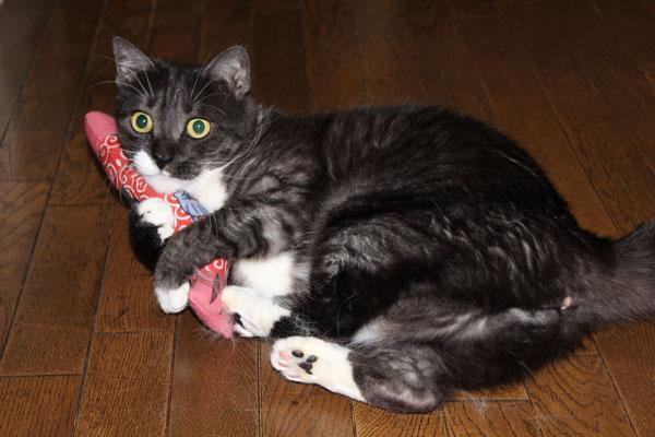 猫キッカー&猫ちゃんのお写真いただきました! ⇒ブログ更新しました
