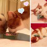 スコットランドから猫キッカーのご感想をいただきました! ⇒ブログ更新しました