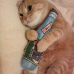 丸福ちゃん、猫キッカーをギュギュ~♪ ⇒ブログを更新しました