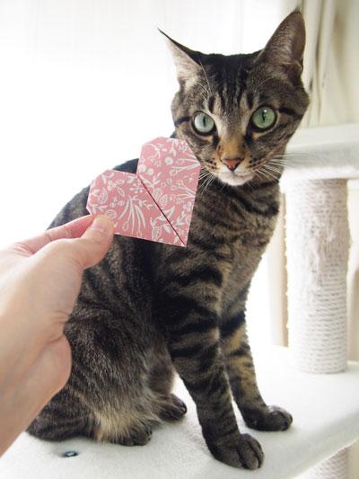 ハート折り紙と猫