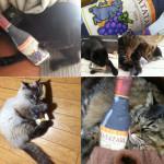 またたび猫キッカーをInstagramで紹介していただきました!