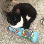 ロンドンから【またたびキッカー&猫ちゃん】のお写真をいただきました!