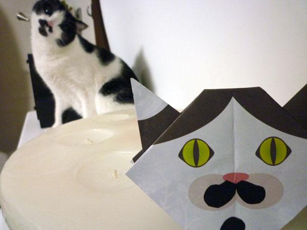 猫ちゃん画像2