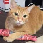 from Hong Kong! 猫キッカーのご感想を頂きました!