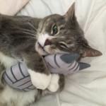 From England: Montyちゃんと猫キッカーのお写真をいただきました