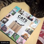 Finally got the CATS ON INSTAGRAM book!We are really honored to be one of photos in this adorable cat book!Thank you @cats_of_instagram for choosing photo of Myu.#cat#neko#catsofinstagram#キジトラ#サバトラ#coibooks