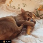Thank you @n__cat for sharing your cat playing with Cat Kicker of Nyagomidokoro!!absolutely lovelyrub! rub! kick! kick! .See more Nyagomidokoro cat kicker:https://www.etsy.com/jp/shop/Nyagomidokoro.国内販売は「にゃごみ処」を検索してねhttp://www.nyagomi.com.Jessica! If you see this post, contact me please!!!!.🐈🐈🐈🐈🐈🐈.#Repost @n__cat with @repostapp・・・Crazy love!  Thanks, Jessica!아이- 좋아. 아이- 좋아. #Nyagomidokoro #SeoulSuperhostcat #AirbnbPhoto#cat #Abyssinian #cutie #lovekittens #pet #pets #cute #sweet #catoftheday #animal #ilovemypet #Abyssiniancat #Sorrel #ilovemycat #Seoul #catlover #instapet #猫 #ねこ #고양이 #neko #catstagram #alicenpaul #앨리스앤폴#にゃごみ処#猫キッカー
