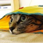 #tbt to when I was 10-month old!Playing #hideandseek ! .10ヶ月のみゅ〜くん。だいぶ大人の顔になってますね〜.よくこの袋に身を潜めて、私が通ると飛び出してきました!驚いたふりして遊んでました〜😬懐かしい.#neko#catsofinstagram#キジトラ#サバトラ#IGersJP