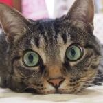 Happy Caturday! .Have a lovely weekend furfriends!…あぅ、先月末からの激務の末、ついに現実逃避〜ちょっとだけ許して〜..#cat#neko#catsofinstagram#キジトラ#サバトラ#IGersJP#土あっぷ祭