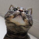 にょ〜んと Happy #whiskerswednesday ..水曜日、すべりこみセーフ!..#catsofinstagram#キジトラ#サバトラ#IGersJP