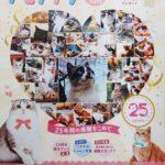 PEPPYのカタログと通販で、にゃごみ処の猫キッカーを購入いただけます!