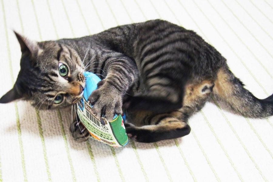 またたび猫キッカーを作るきっかけになったこと
